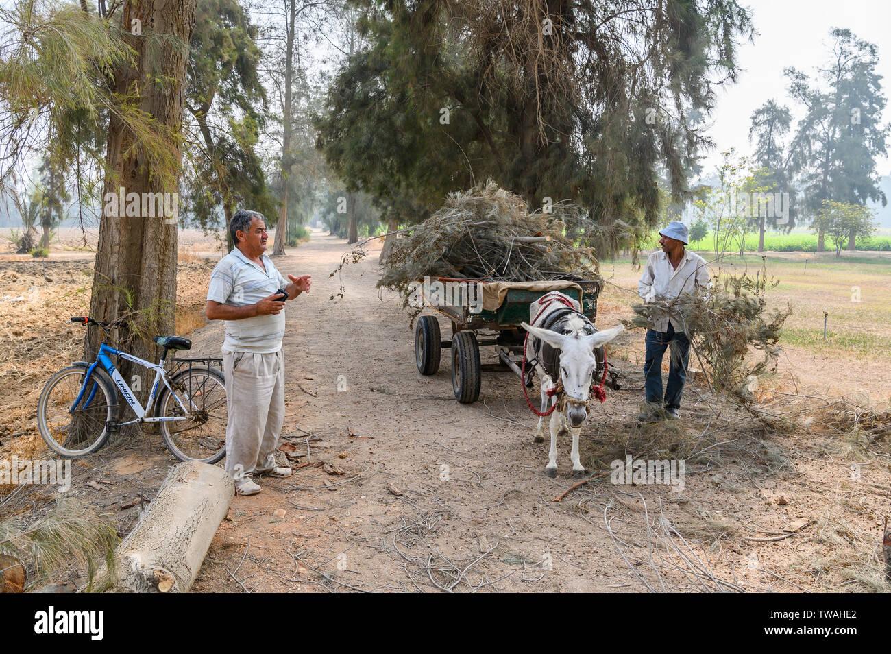 Sekem farm, Markaz Belbes, Egypt - Stock Image