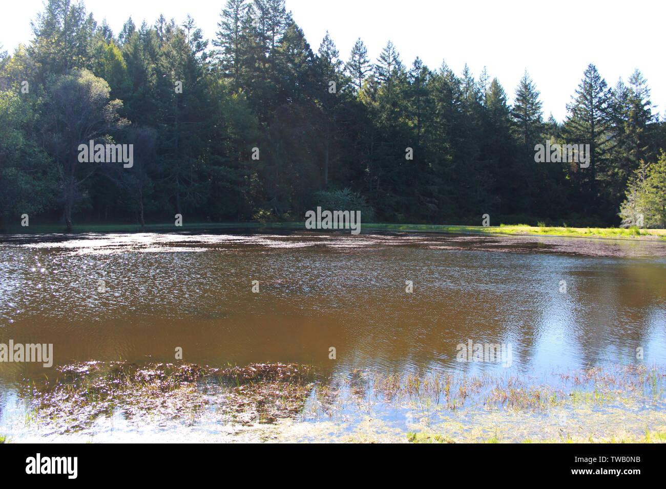 Scenic pond at Leggett, California - Stock Image