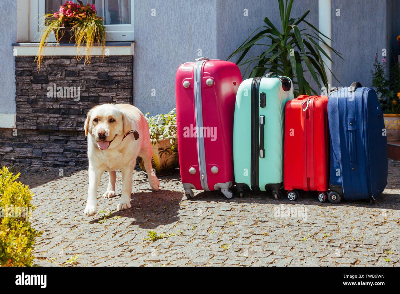 Suitcase Dog Stock Photos & Suitcase Dog Stock Images - Alamy