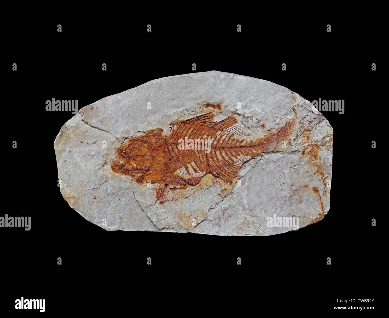 Fish Fossil Isolated on Black Background, Clipping Path Stock Photo