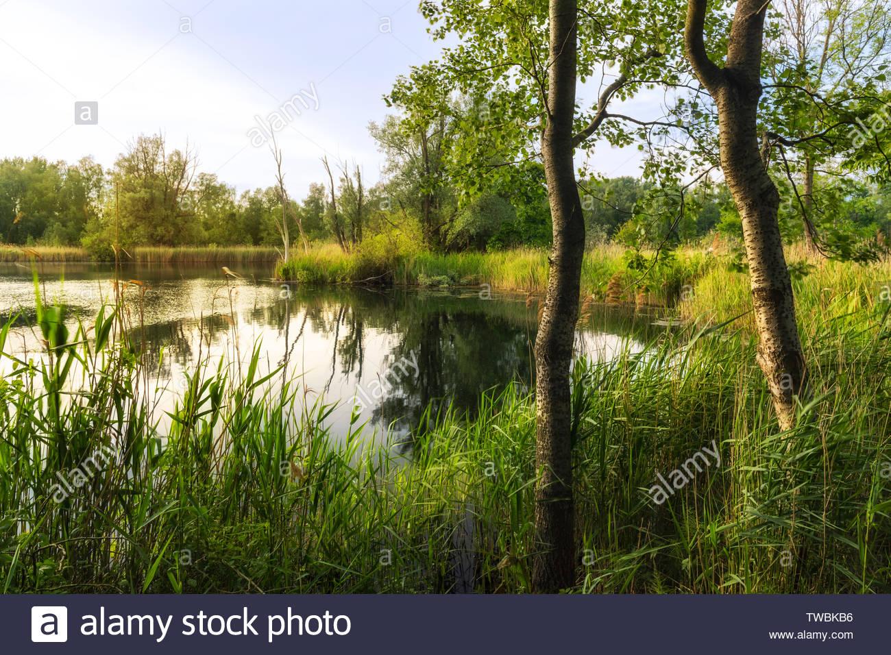 Walenhoek, Niel, Belgium:  Beautiful small lake at golden hour - Stock Image