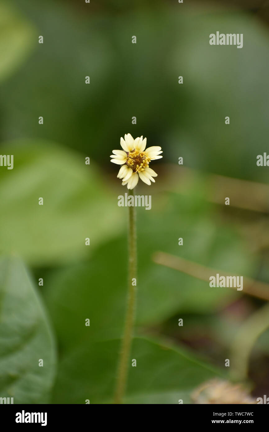Tiny Flower With Blurred Background - Stock Image