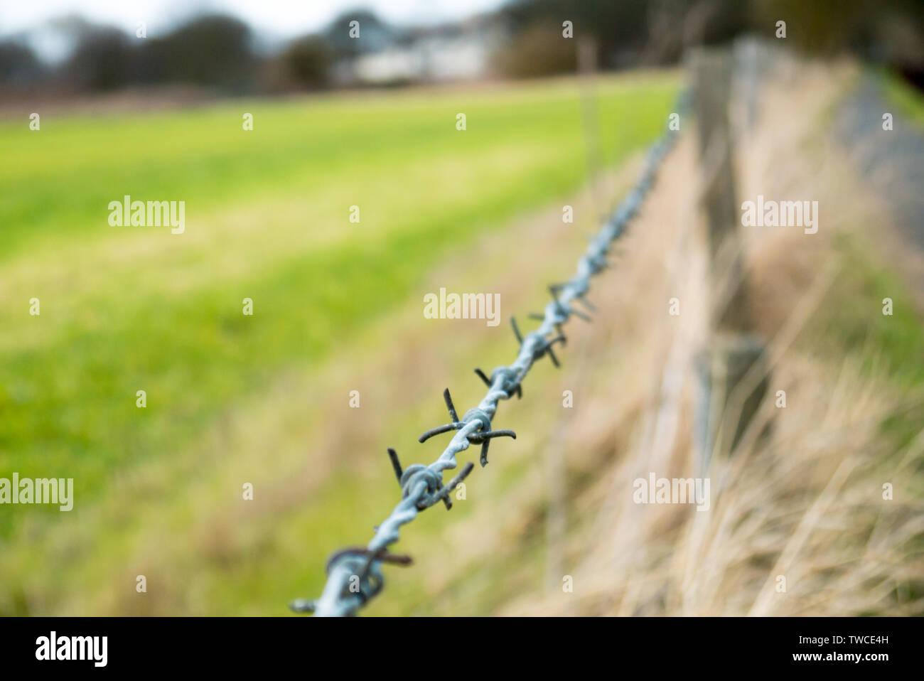 Dangerous Barbed Wire Fence Lining a Countryside Pathway - Stock Image