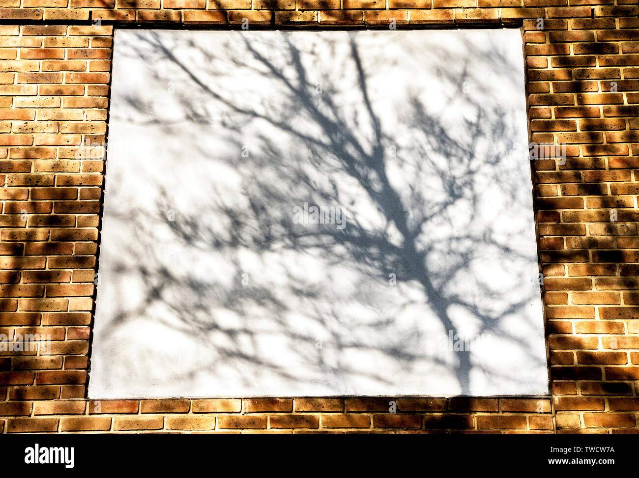 shadows of tree branches and leaves on urban walls in bright sunlight Stock Photo