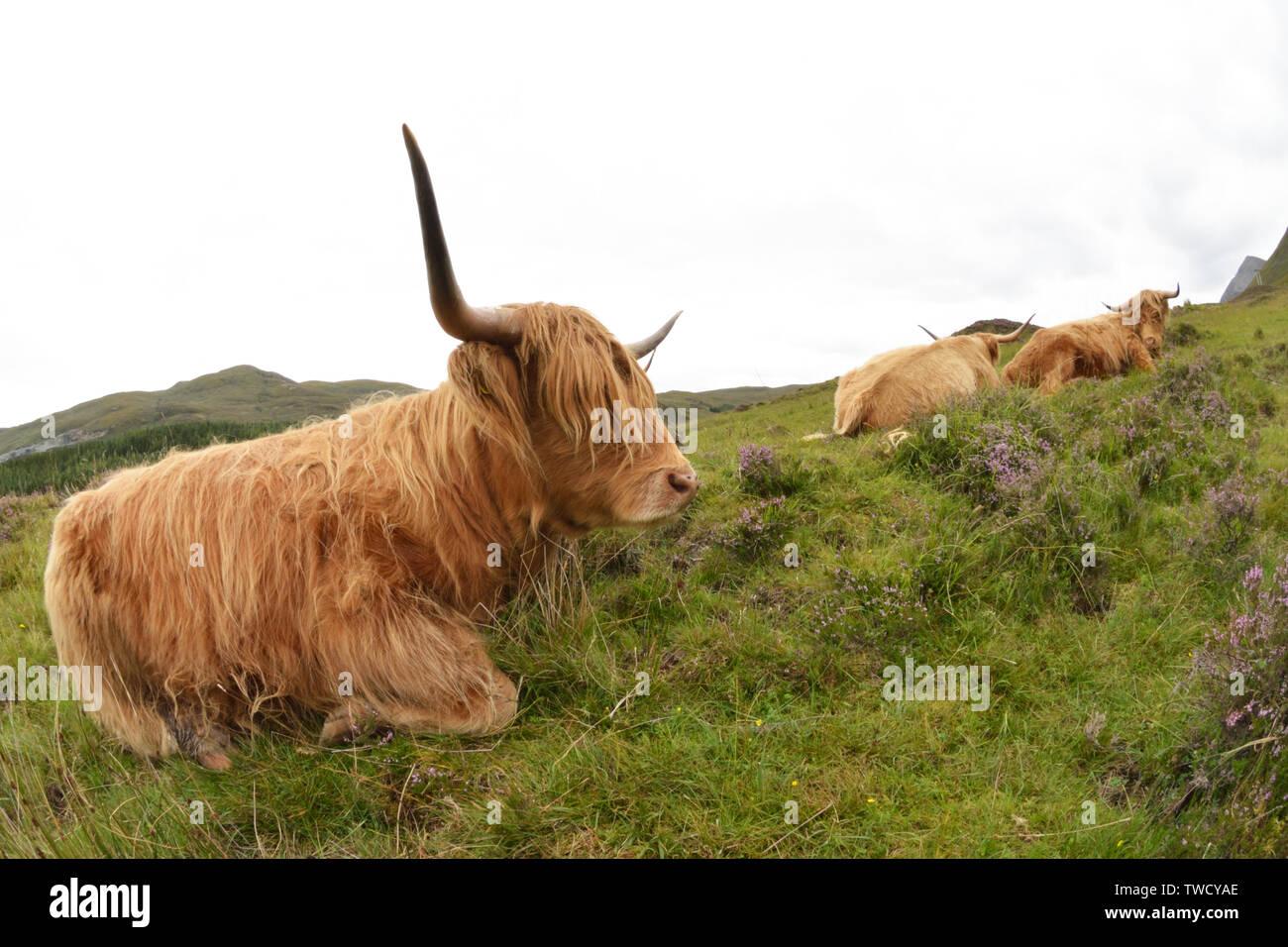Isle of Skye, Scotland - Stock Image