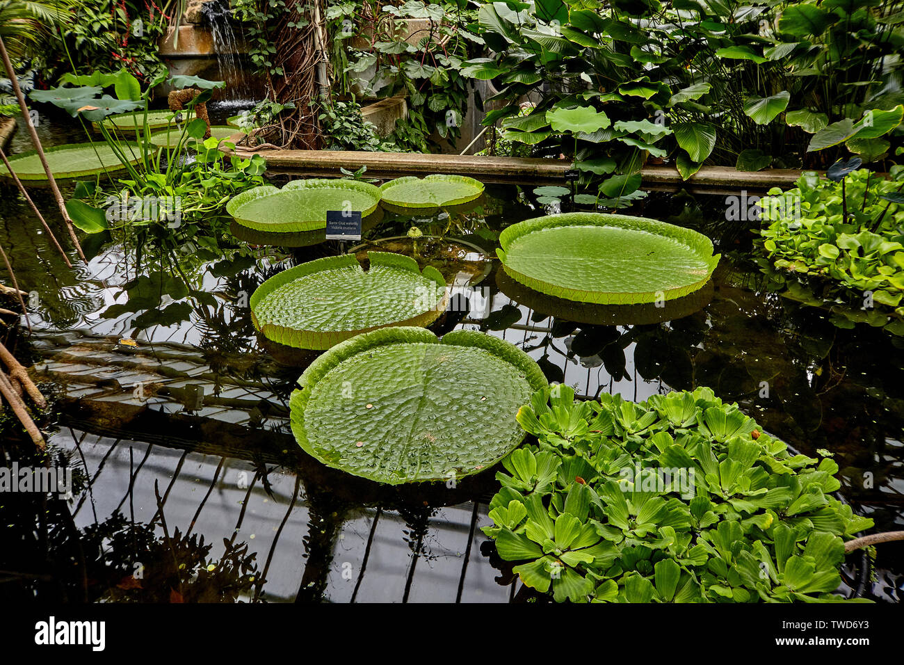 Royal Botanic Gardens, The collections include over 28,000 taxa of living plants, 8.3 million plant and fungal herbarium specimens. Stock Photo