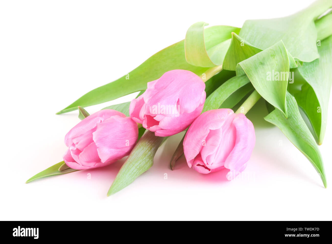 Pink tulips bouquet on white background - Stock Image