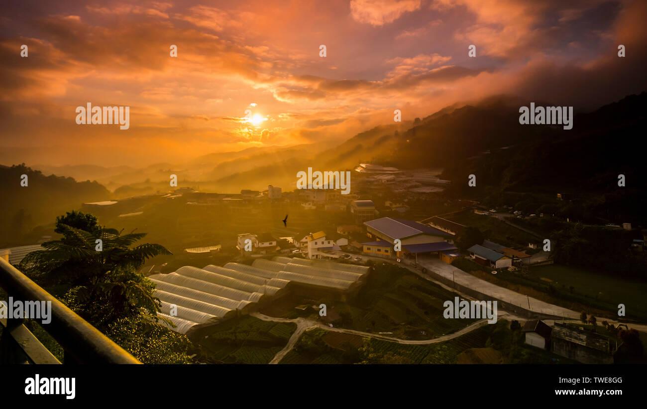 Cameron Highland at sunrise - Stock Image