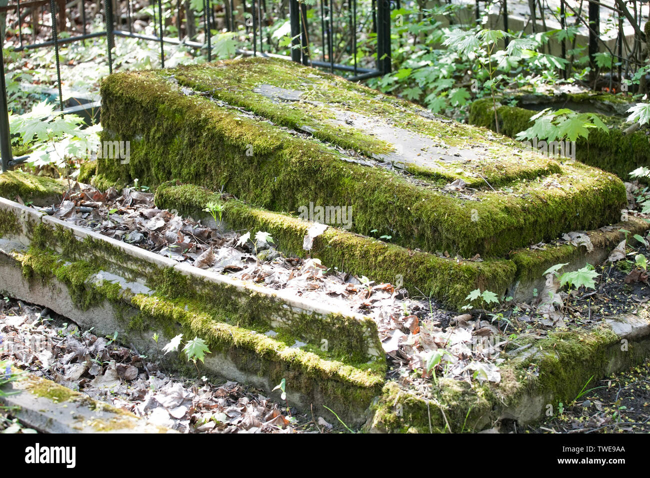 Stone Cemetery Grave Monument Covered With Moss Closeup View On