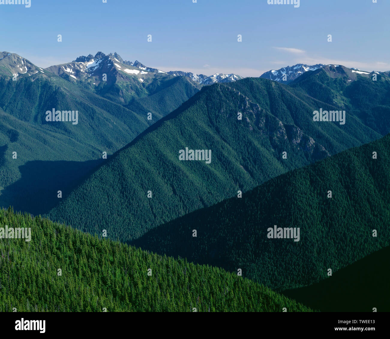 USA, Washington, Olympic National Park, Mt. Deception (top left) rises above densely forested ridges and valleys; view south from Deer Park. Stock Photo
