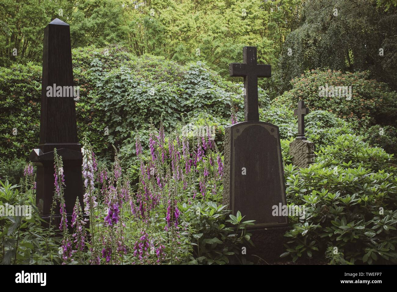 Beautiful old graves surrounded by colorful blooming digitalis flowers, seen in Hamburg Ohlsdorf, the world´s biggest garden cemetery Stock Photo
