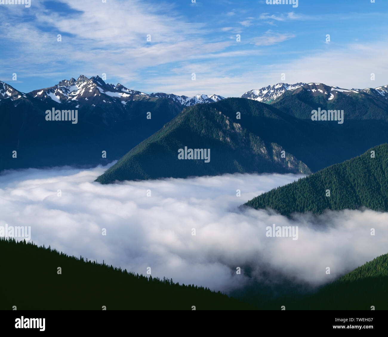 USA, Washington, Olympic National Park, Morning fog fills converging valley bottoms, view south from Deer Park with Mt. Deception in the upper left. - Stock Image