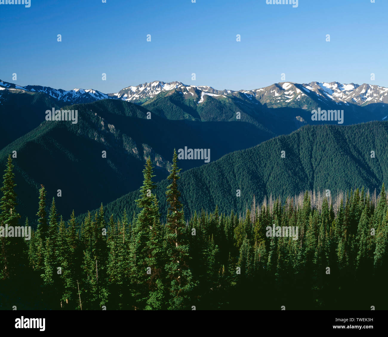 USA, Washington, Olympic National Park, Peaks and ridges of eastern Olympic Mountains, view south from Blue Mountain. - Stock Image