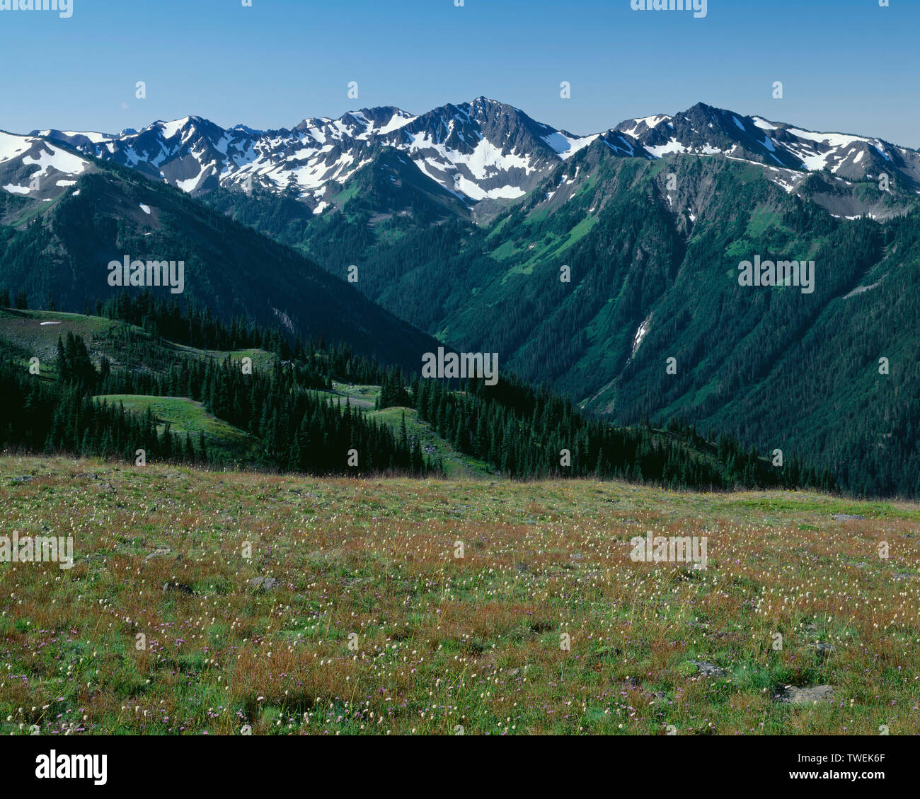 USA, Washington, Olympic National Park, View from near Obstruction Peak towards Lillian River Valley and surrounding peaks of the Olympic Mountains. - Stock Image