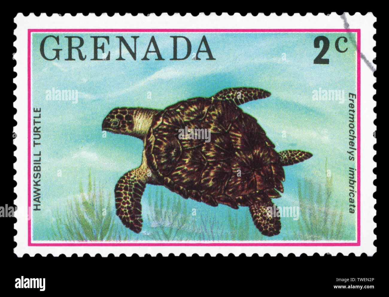 GRENADA - CIRCA 1976: A stamp printed in Grenada shows Hawksbill turtle - Eretmochelys imbricata, circa 1976. - Stock Image