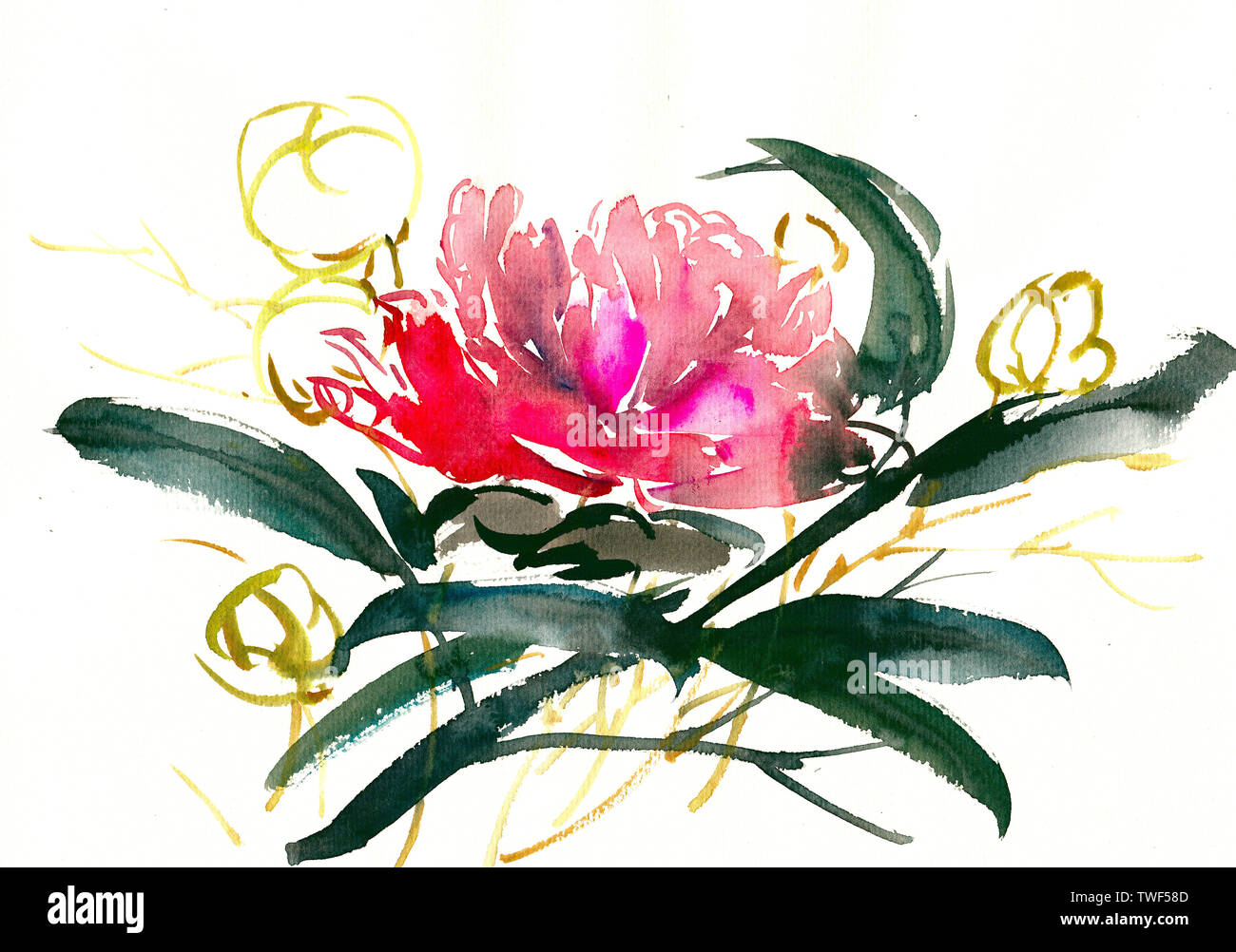 Big Flower Plant Drawing Illustration Decorative Watercolor Ink Hand Drawn Stock Photo Alamy,Boneless Ribs In Oven