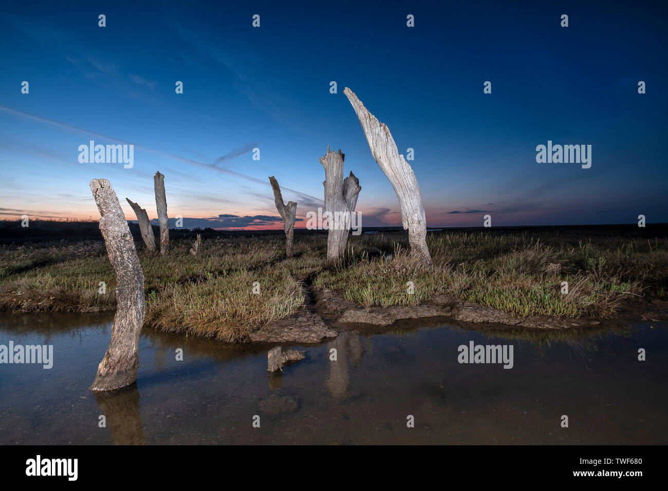 Thornham old harbour sticks lit up with flashlight as the sun sets. - Stock Image