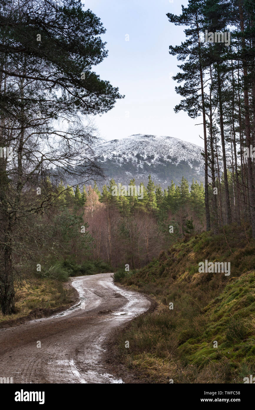 Glen Feshie track in the Cairngorms National Park of Scotland. - Stock Image
