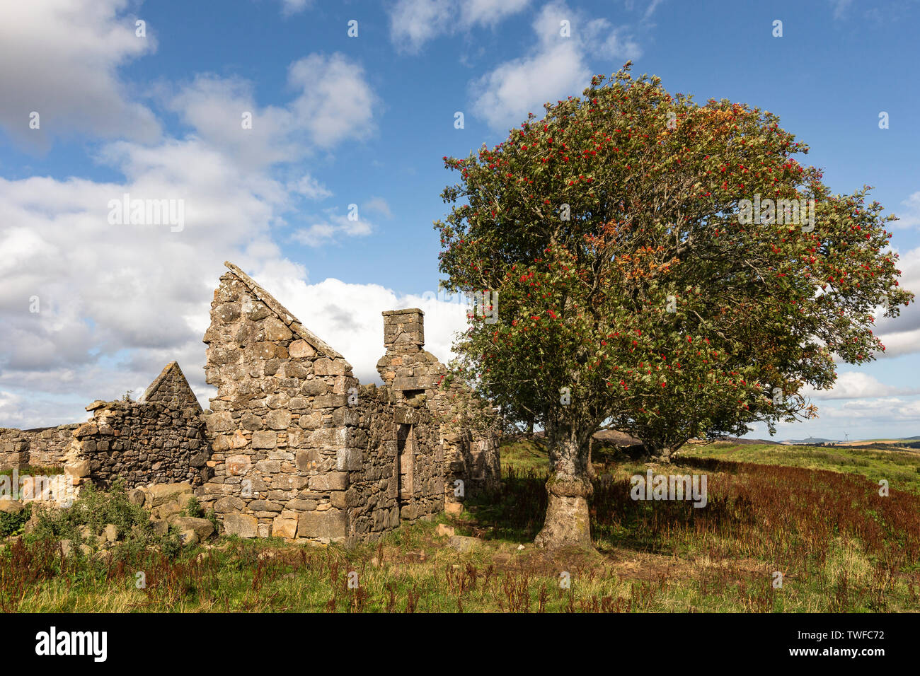 Ruins of Croft at Moss of Tolophin near Auchindoir in Aberdeenshire in Scotland. - Stock Image