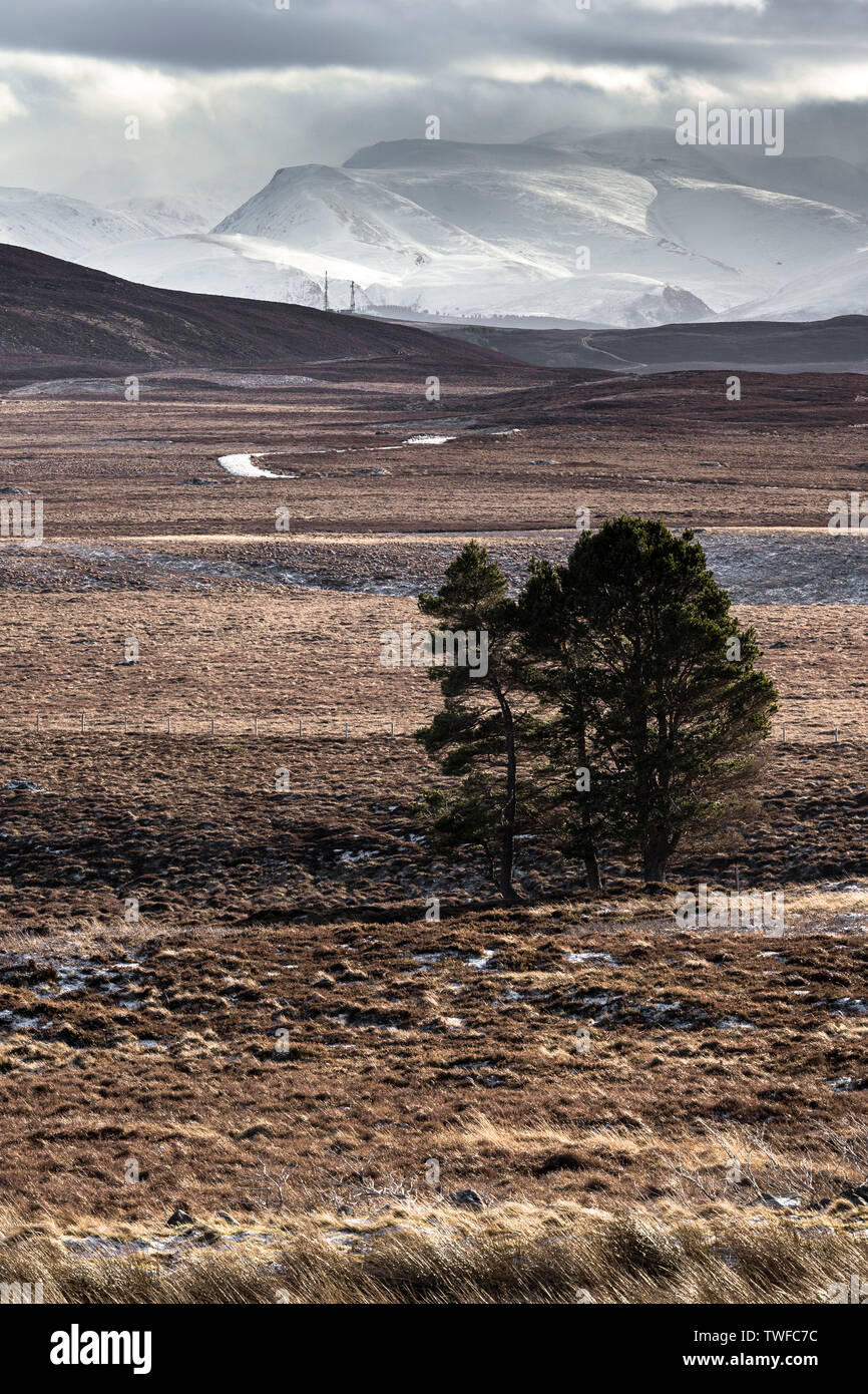Snowstorm over the Cairngorm Mountains from Dava Moor in Scotland. - Stock Image
