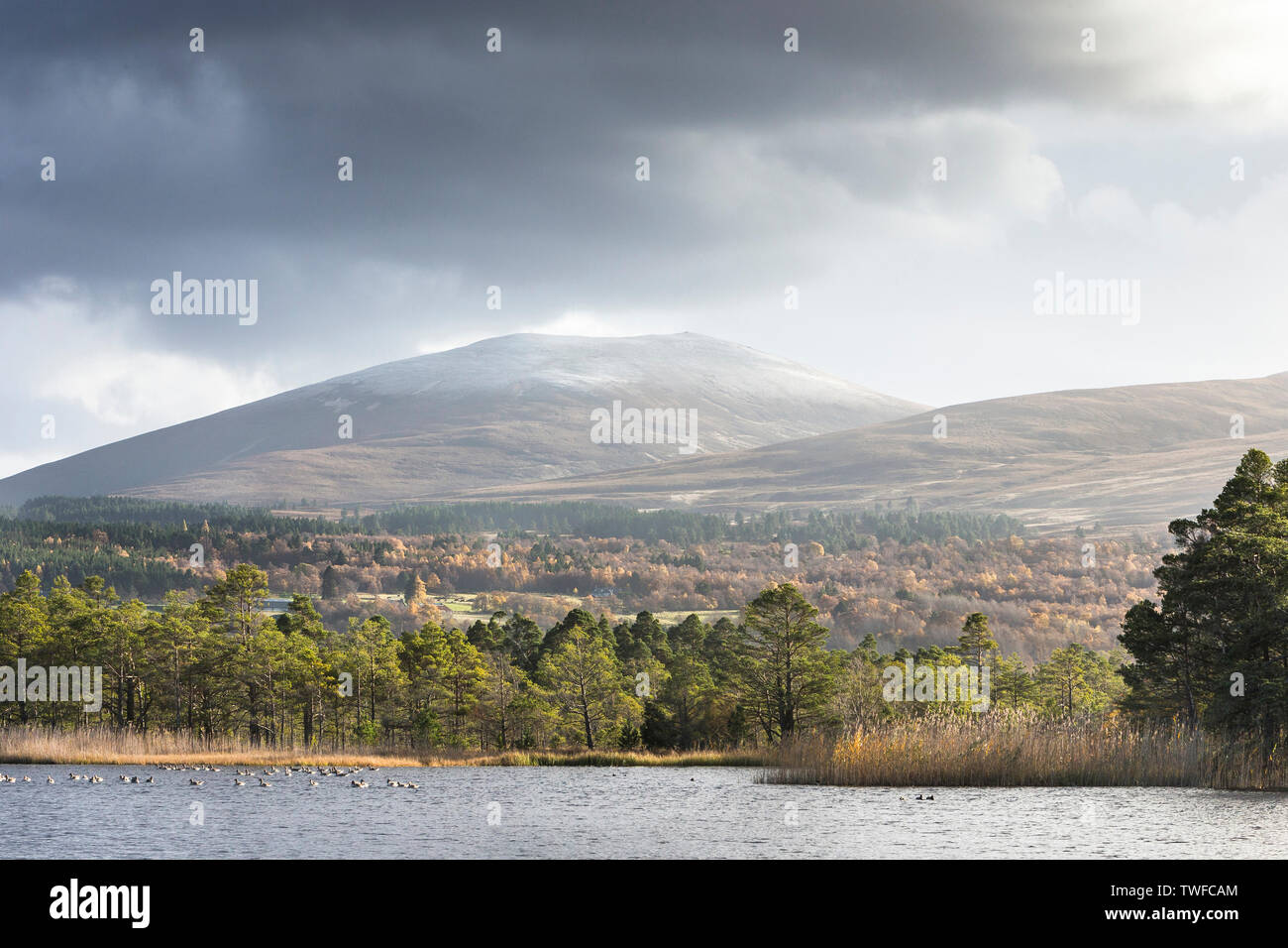Loch Garten and the Meal a' Bhuachaille in the Cairngorms National Park of Scotland. - Stock Image