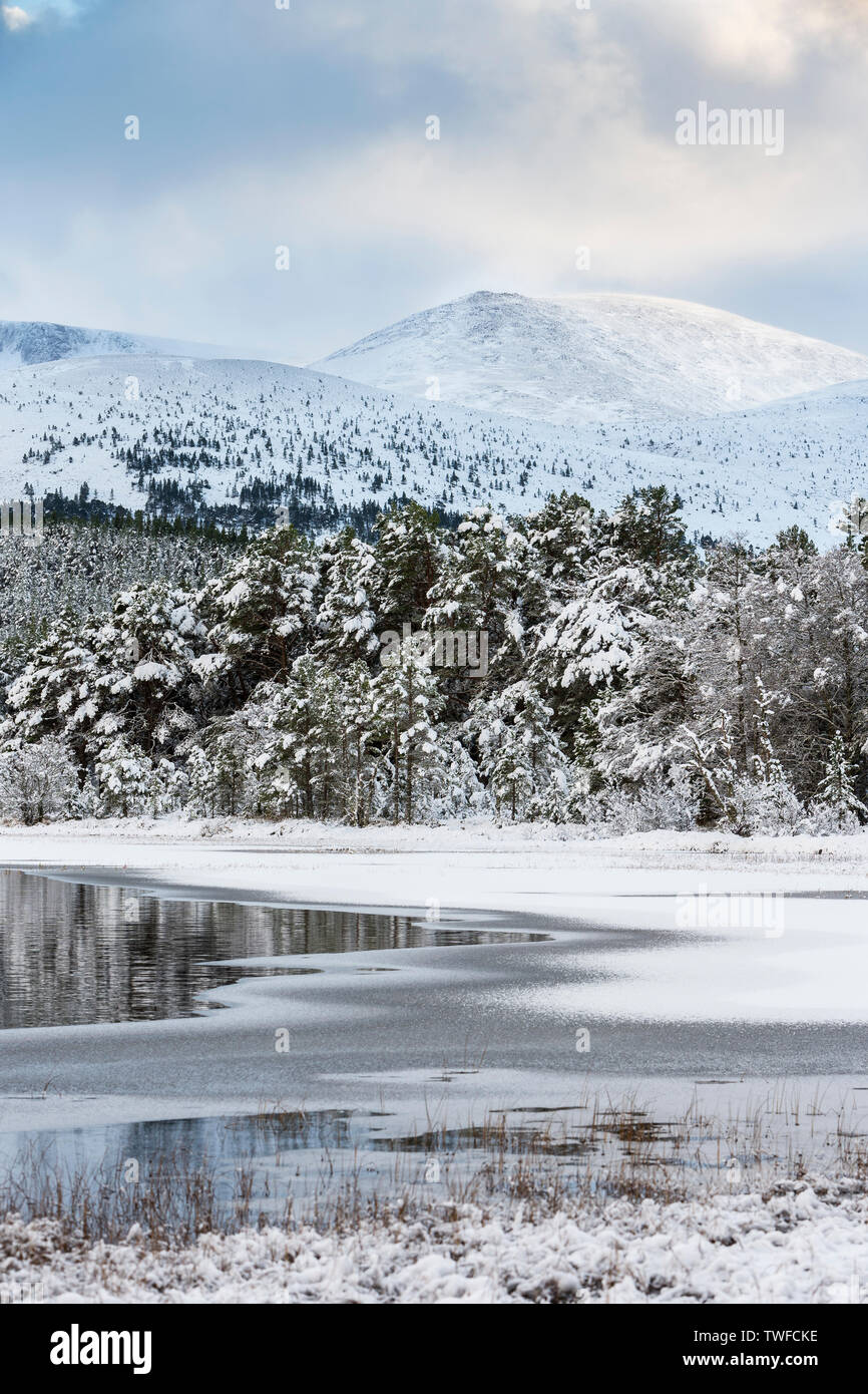 Winter on Loch Morlich in the Cairngorms National Park of Scotland. - Stock Image