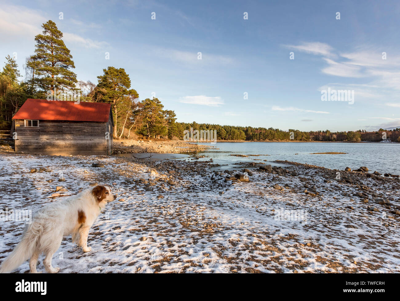 Dog at Loch Vaa in the Cairngorms National Park of Scotland. - Stock Image