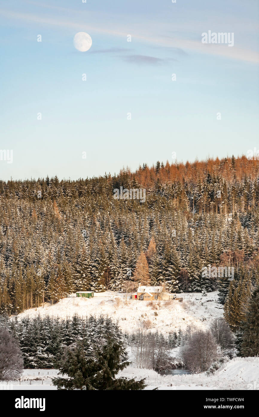 Forest croft in winter at Strathdon in Scotland. - Stock Image