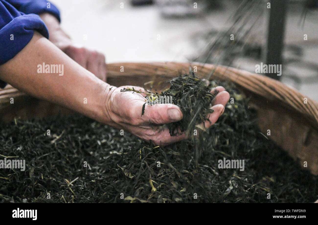 (190620) -- CHENGDU, June 20, 2019 (Xinhua) -- A worker checks Tibetan tea at a tea company in Ya'an, southwest China's Sichuan Province, June 15, 2019. The Chengdu-Ya'an railway, an important part of the Sichuan-Tibet railway, has a length of 140 kilometers and was put into operation on Dec. 28, 2018. Ya'an, a region connecting the Sichuan basin and the Qinghai-Tibet plateau, played a vital role during the ancient times for the Tea Horse Road between Sichuan and Tibet. As a result, the making of Tibetan tea has been passed down through generations and listed as one of the national intangible - Stock Image