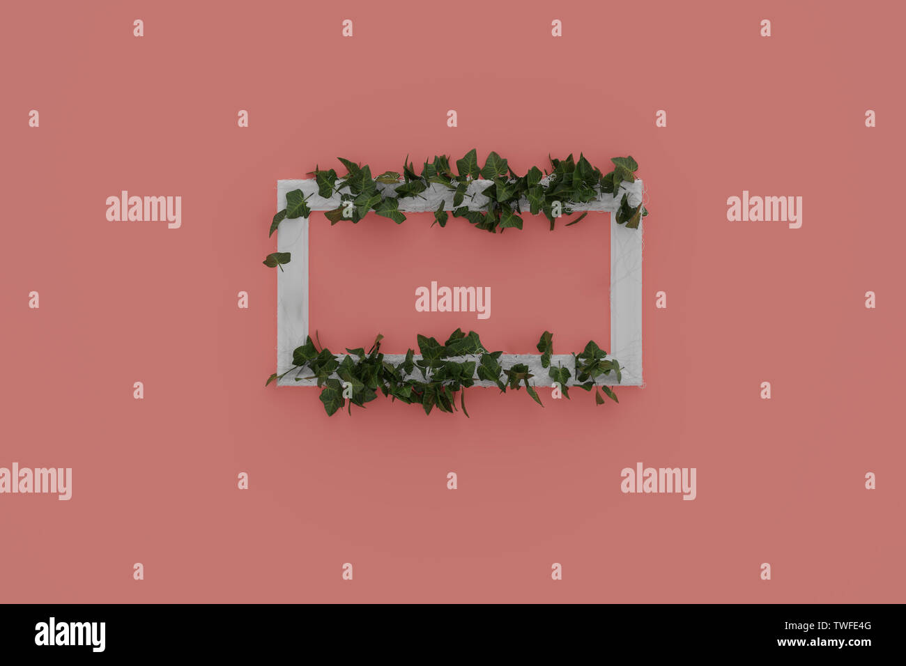 3d rendering of white picture frame laying on pink background and embraced with ivy leaves - Stock Image