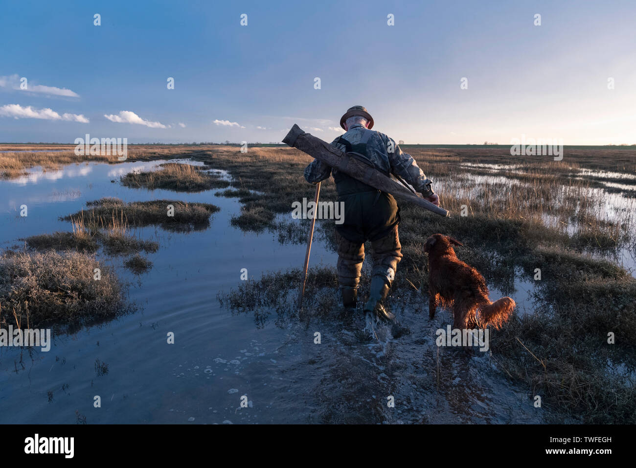 Wildfowling on the Lincolnshire Wash with shooter and gundog walking through the marshes with evening golden hour light as the sun sets. - Stock Image