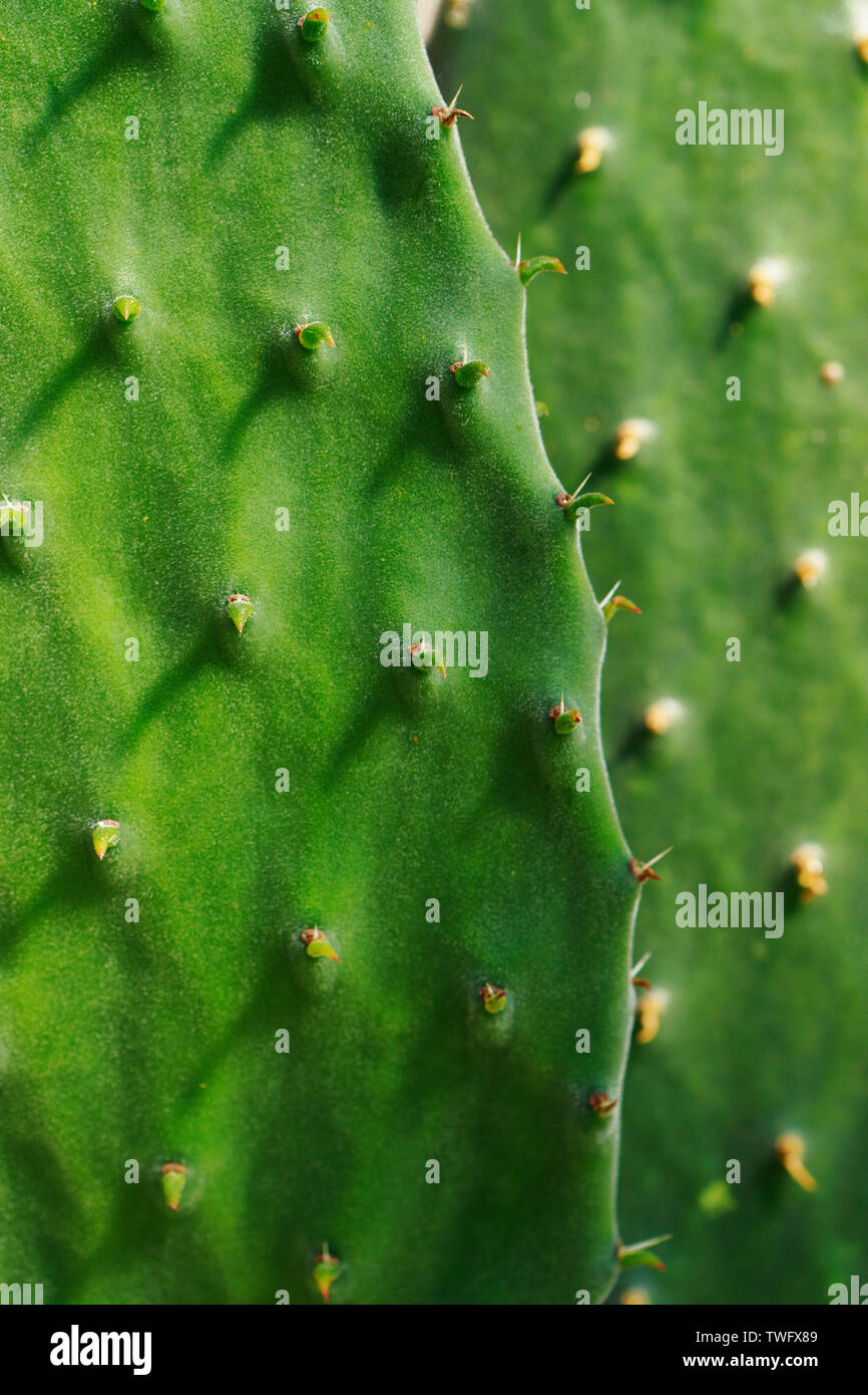 Close up. Cactus. Succulents and cacti Stock Photo