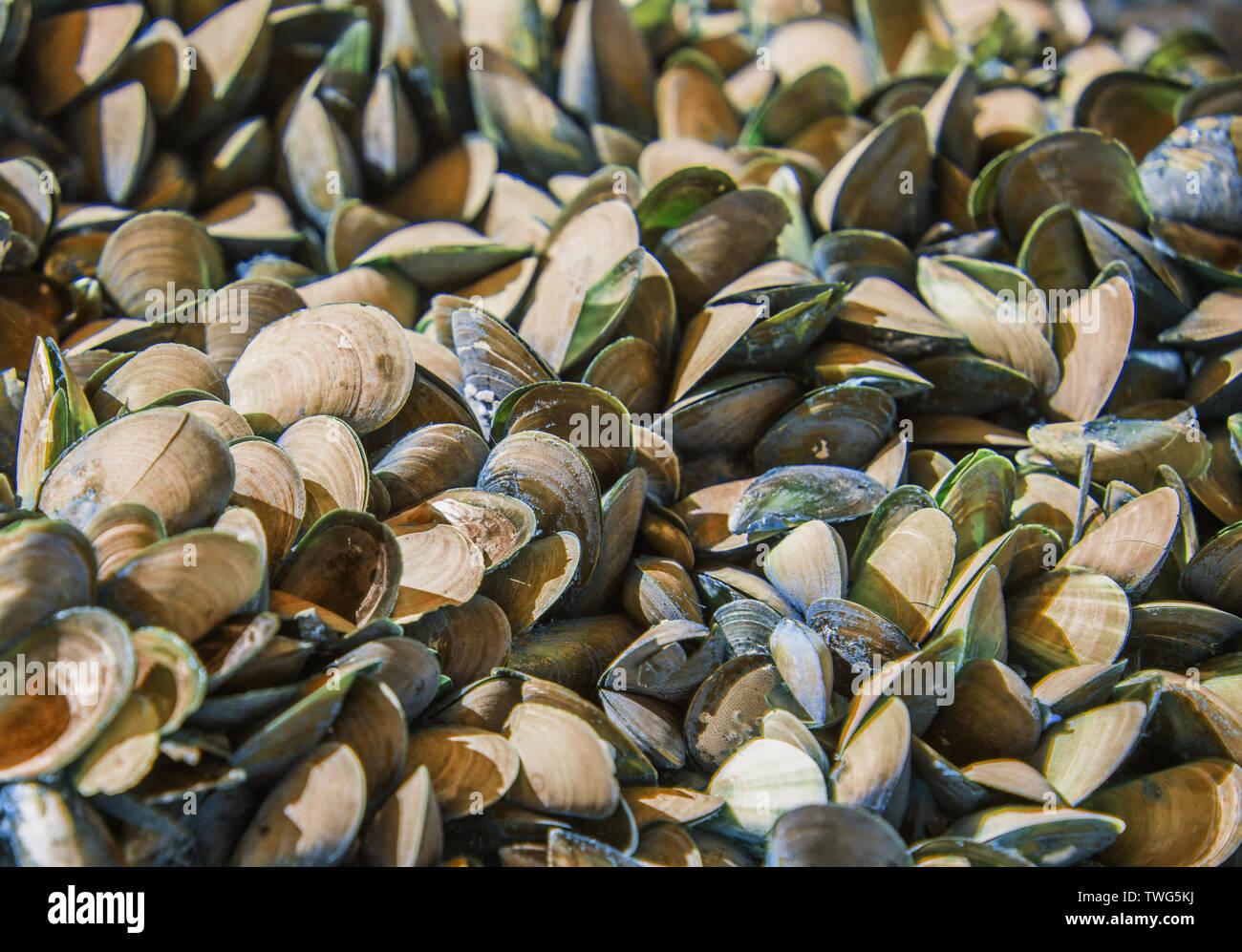 The texture of the shells of sea mollusks. - Stock Image
