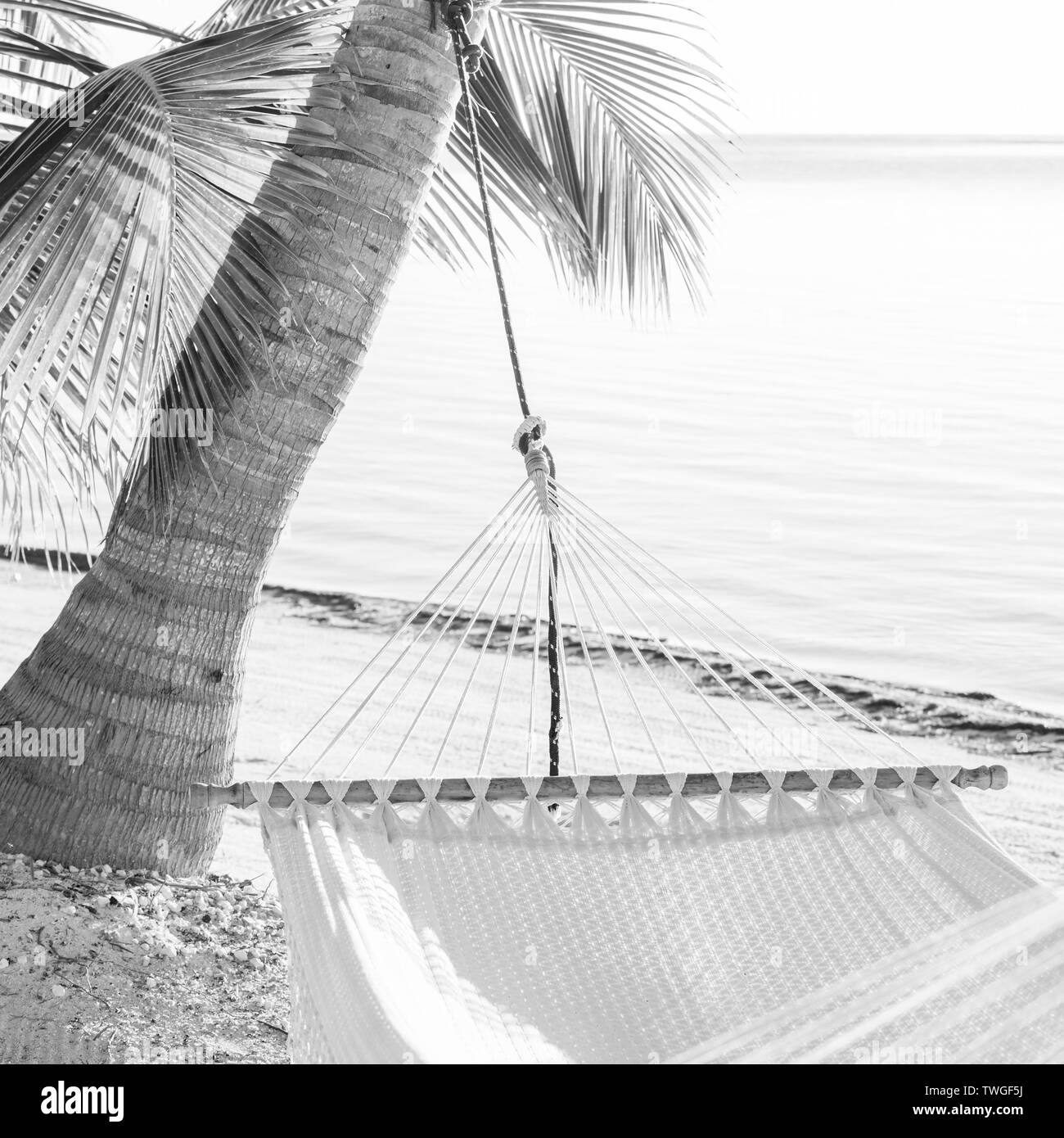 Peaceful vacation hammock on tropical palmtree beach in stunning black and white - Stock Image