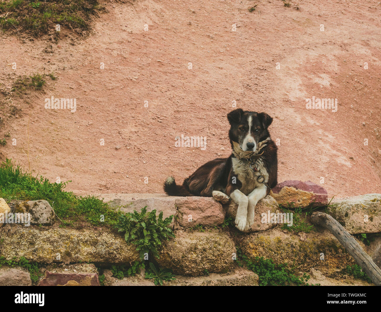 Watchdog mongrel dog lies on a stone curb - Stock Image