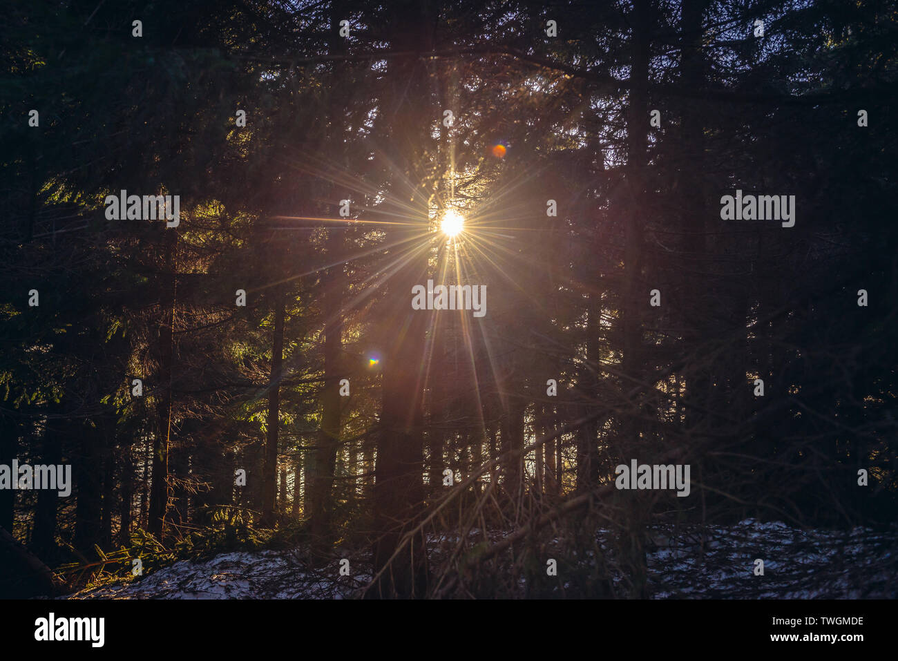 Forest on Wielka Sowa (Great Owl) mount in Landscape Park of Gory Sowie (Owl Mountains range) in Central Sudetes, Poland - Stock Image