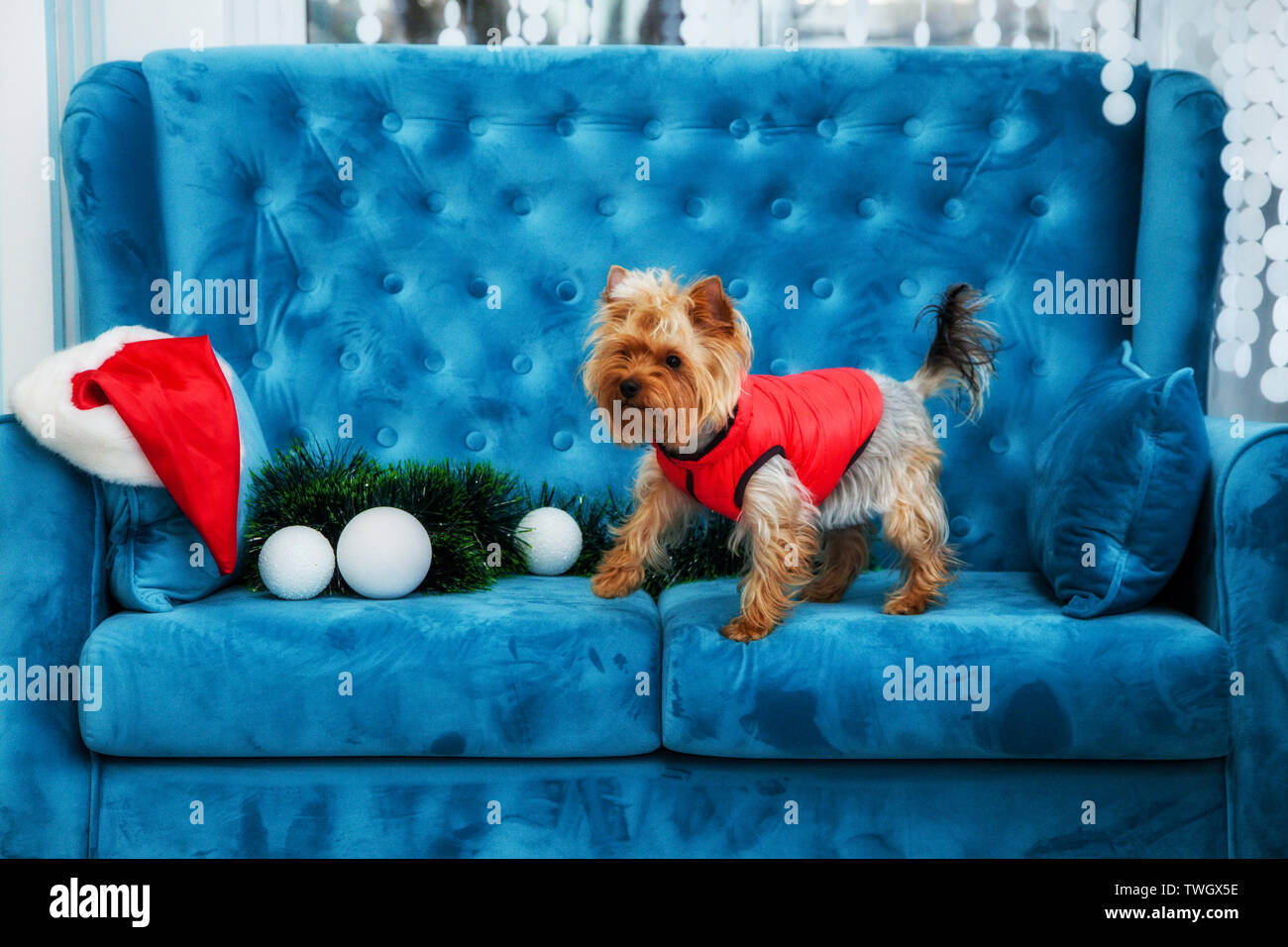 Incredible Snow Couch Stock Photos Snow Couch Stock Images Page 5 Cjindustries Chair Design For Home Cjindustriesco