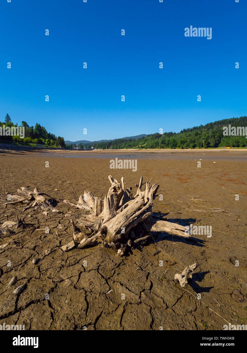 Dried lake-bed Bajer in Fuzine Croatia Spring 2019 lined tree stumps like going walking towards small lake pond Stock Photo