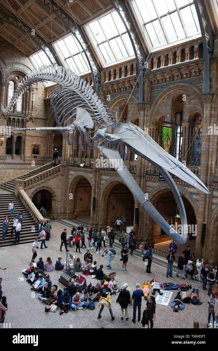 Extinction Rebellion protesters at the Natural History Museum opposing NHM hosting a dinner for the Petroleum Group of the Geological Society. Stock Photo