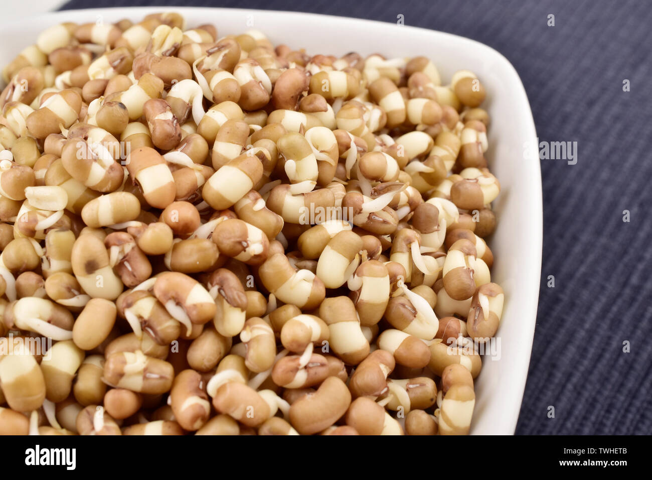sprouts in bowl, macro image of sprouts, mung sprouts-9l - Stock Image