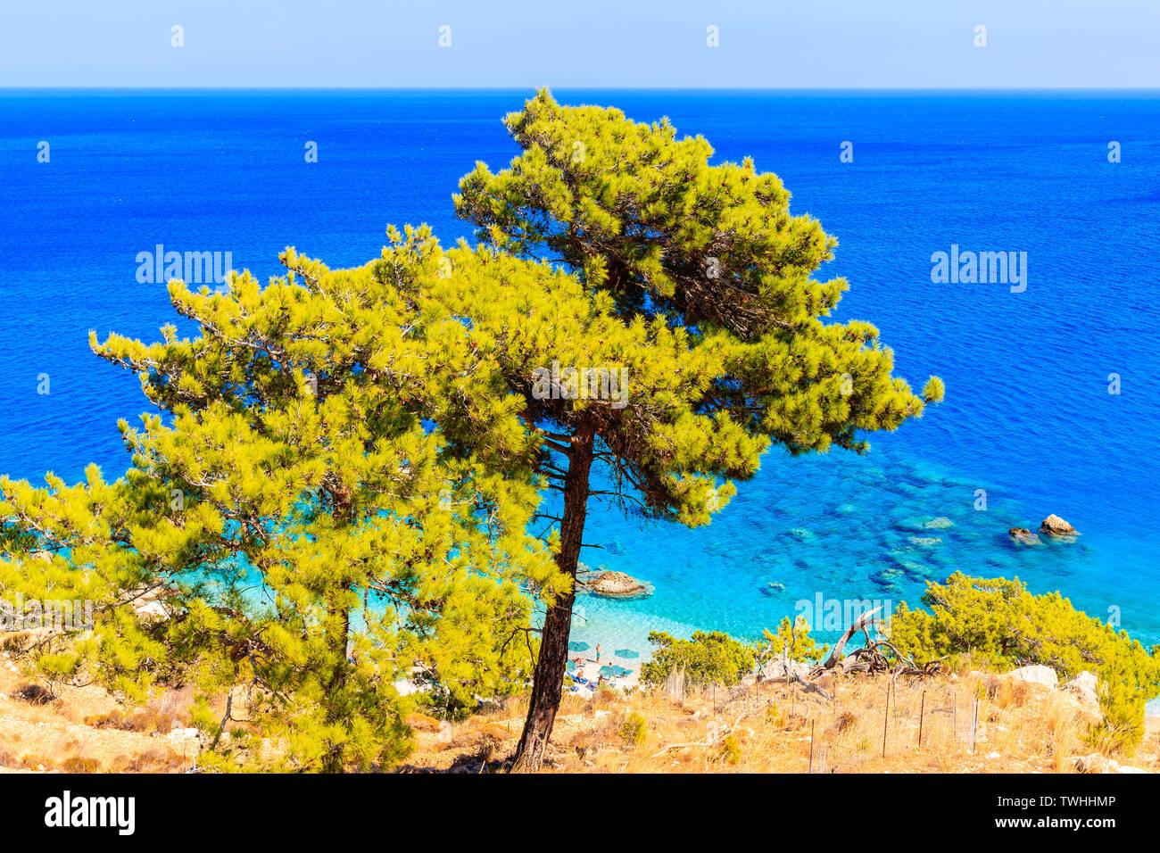 Pine trees on beautiful sea coast near Apella beach on Karpathos island, Greece Stock Photo