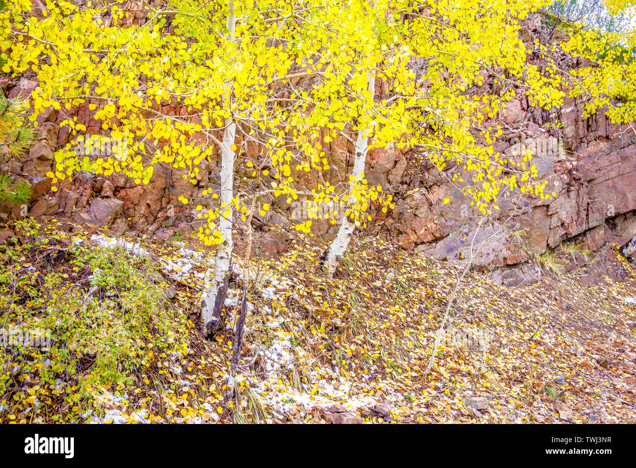 Changing of the seasons on a Colorado mountain slope Stock Photo