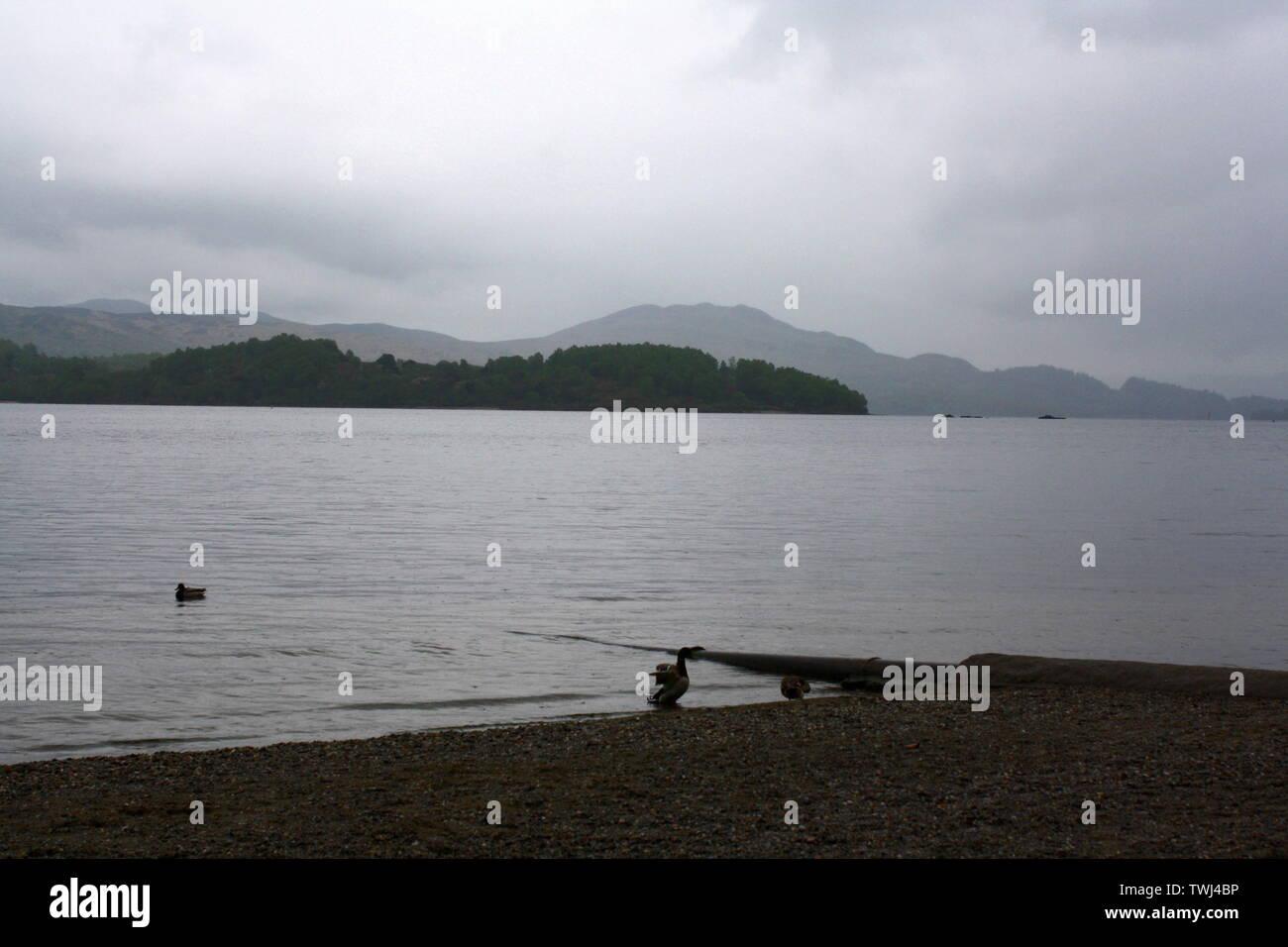 Landscape/seascape of ducks on the coast of Loch Lomond, Scotland, United Kingdom - Stock Image