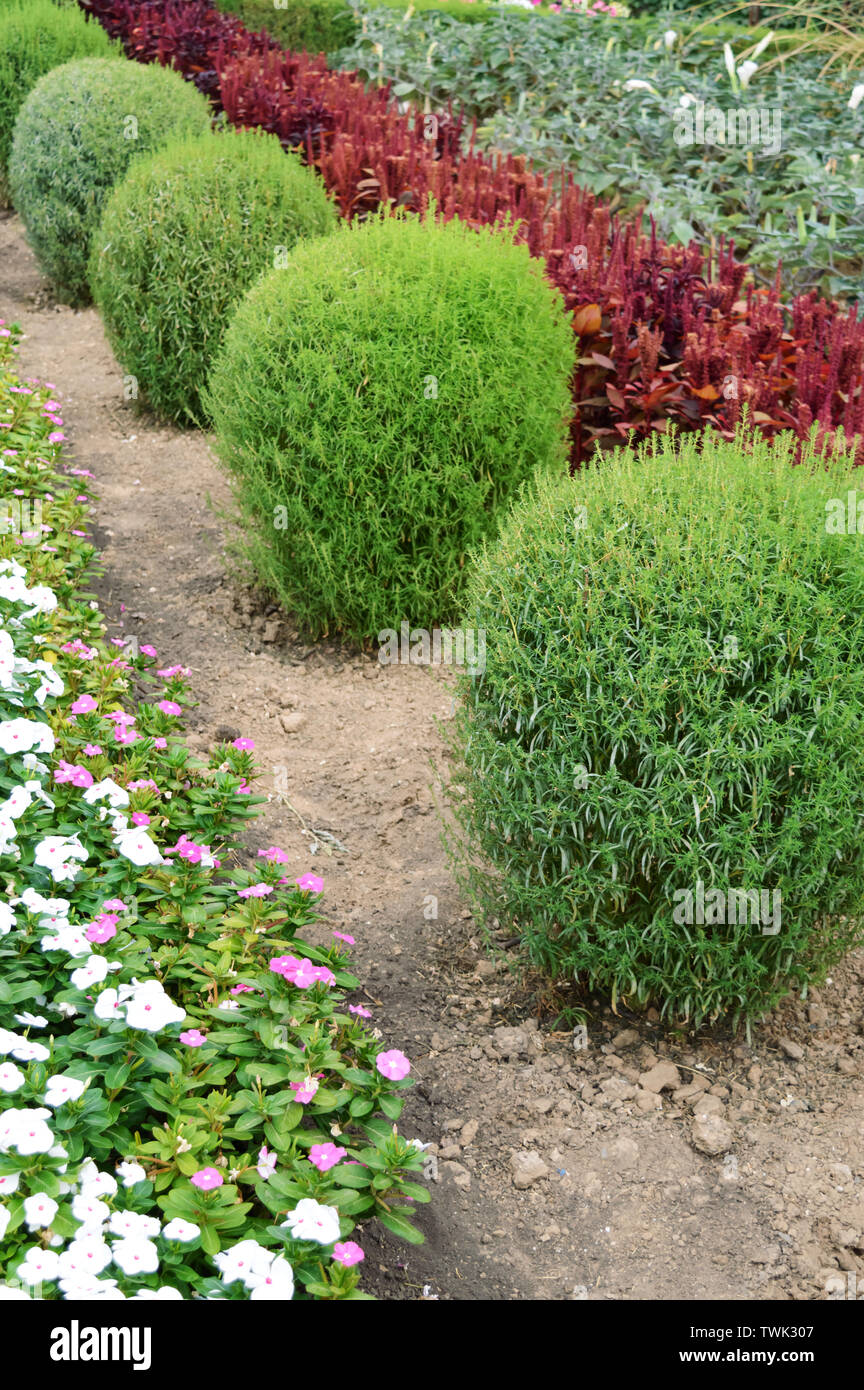 Beautiful Design Of The Yard Blooming Flower Beds And Hedges