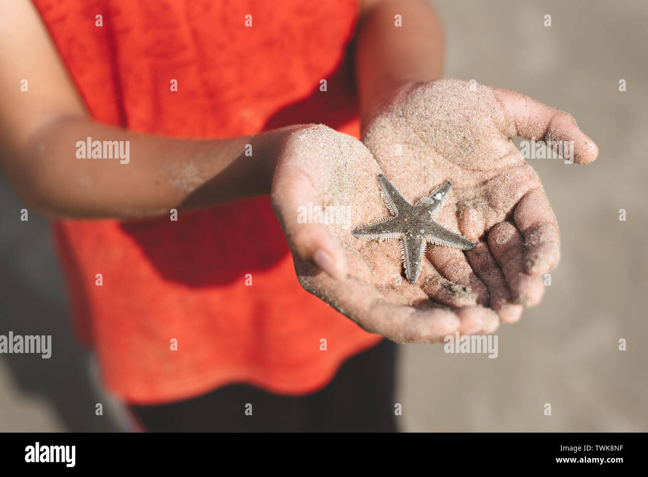 child holding or showing a starfish in a cupped hand with beach sand. concept of marine and aquatic life - Stock Image