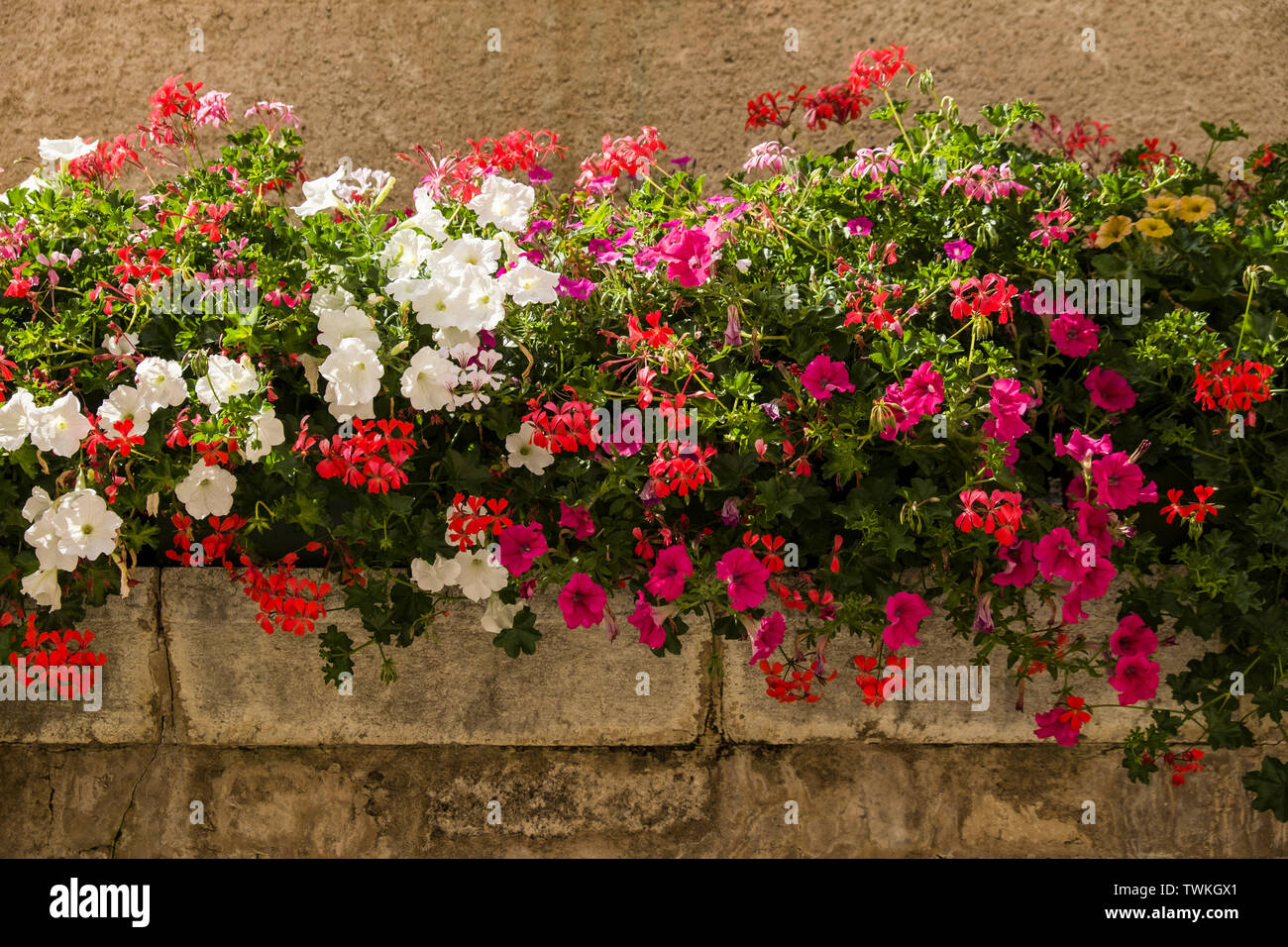 A densely packed stone trough overflowing with summer flowering plants. - Stock Image