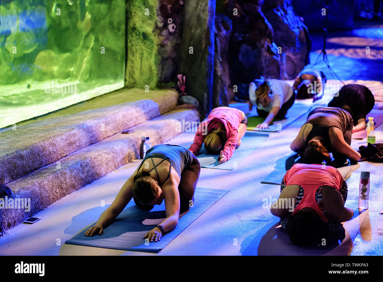 Brighton, Sussex, UK. 21st June, 2019. The Mayor of the City of Brighton & Hove Councillor Alex Phillips joins in a special yoga at the aquarium class on Friday 21 June 2019 at Brighton SEA LIFE, Brighton. Picture by Julie Edwards/Female Perspective. Credit: Female Perspective Ltd/Alamy Live News Stock Photo