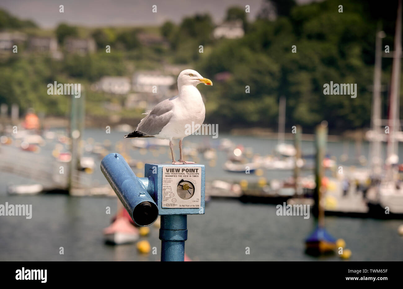 A seagull stands on the top of a viewing telescope in the port of Fowey, Cornwall, UK Stock Photo