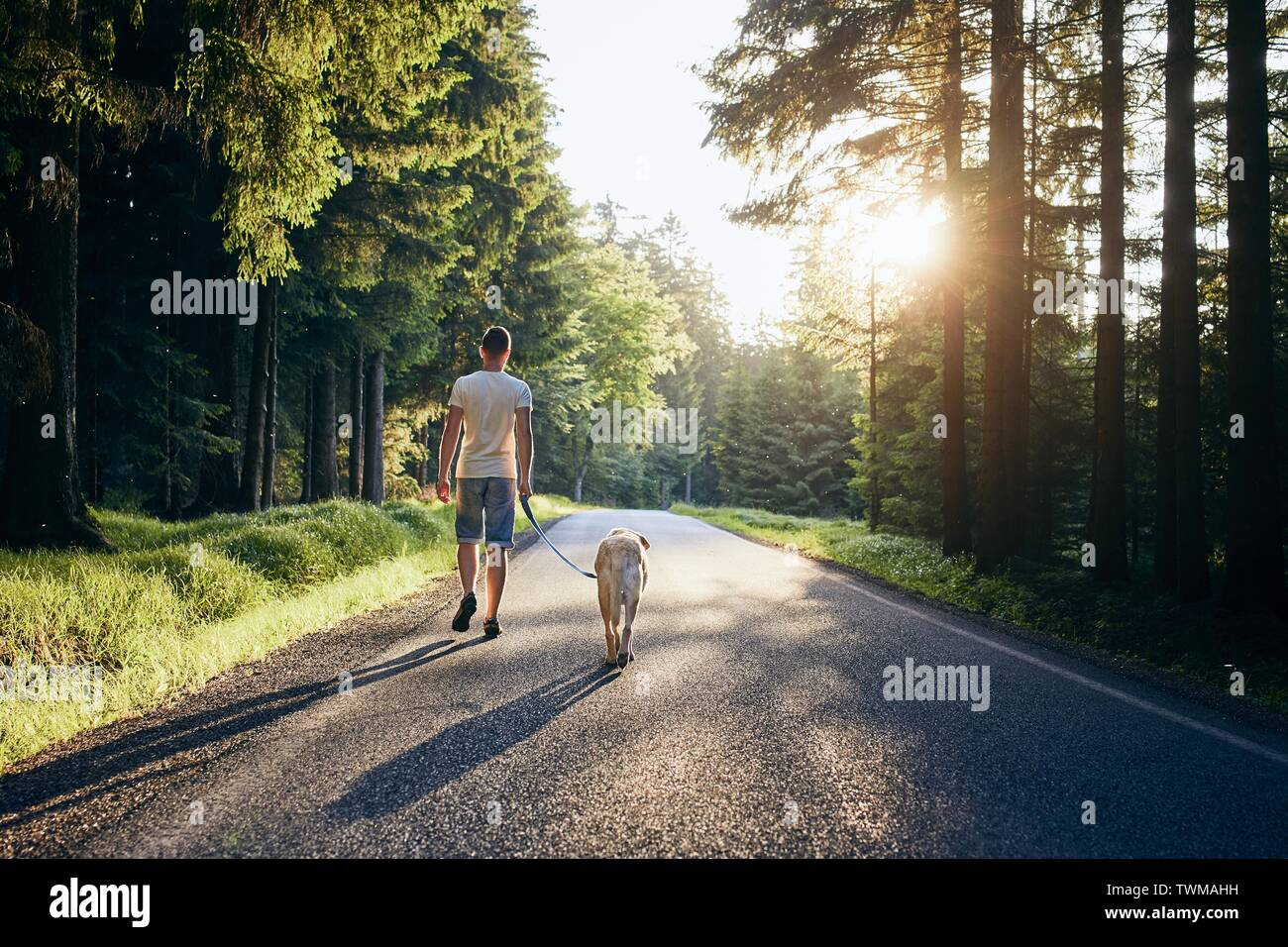 Summertime with dog. Man and his labrador retriever walking on road in forest against beautiful sunset. - Stock Image
