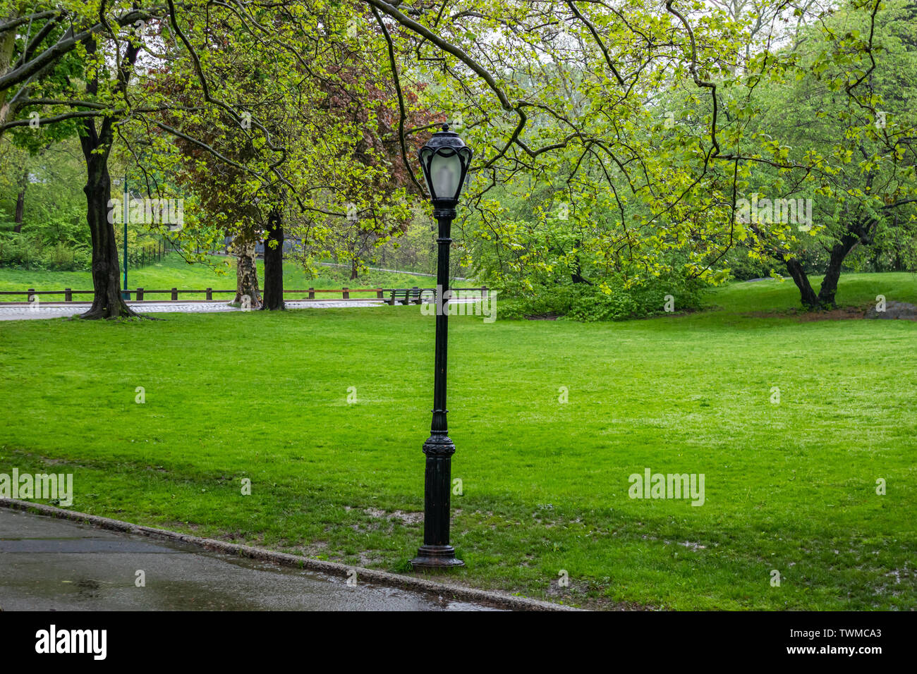 Raining in Central Park, New York city. Spring fresh tree foliage and green grass wet after the rain - Stock Image